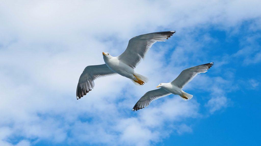 seagull-2394636